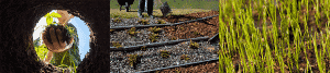 Healthy soil for landscaping