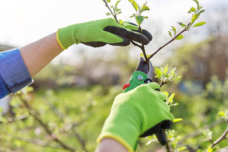 Landscaping Tips Pruning Seasonal