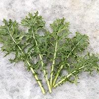 Kale Garden Healthy