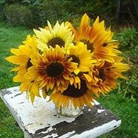 Sunflower Garden Landscape