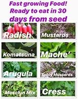 Veggie Garden Fast Food